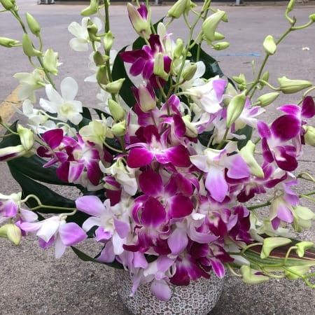 Orchid Love-Mothers Day Flowers