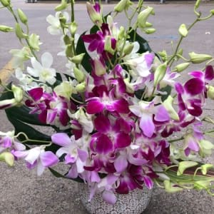 Orchid Love-Mothers Day Flowers Melbourne