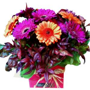 Congratulations Warm Gerbera Boxed