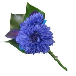 Blue Buttonhole Cornflower