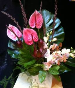 Antherium boxed  arrangement