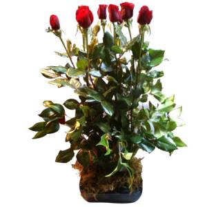 Long Stem Red Rose Arrangement