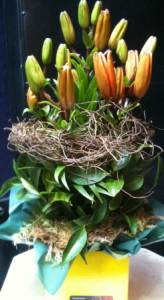 Orange lilly boxed