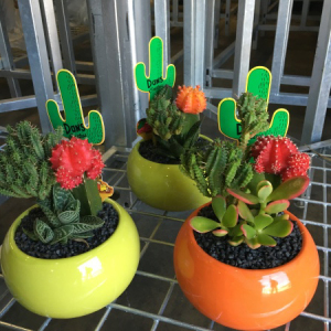 Low Maintenance Trio Cactus pots - Send Plants Melbourne.